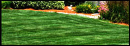 Lawn Maintenance and Mowing - Powder Springs, GA