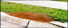 Fire Ant Control - Powder Springs, GA