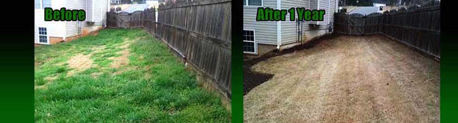 A weedy backyard near Dallas, Ga Before and AFter our Lawn Care Program