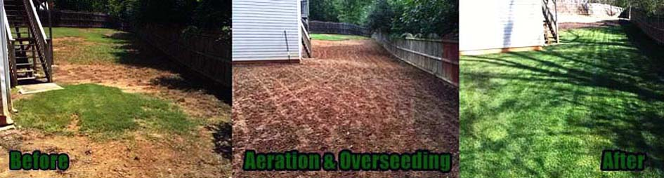 A fescue lawn aerated and overseeded from scratch in Dallas, GA